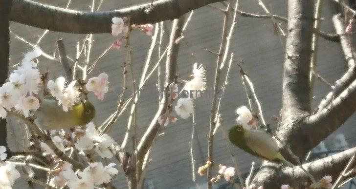 ホームシアター オーディオ ブログ 写真 スマートフォン デジタルカメラ 露光 露出 天体 月 月虹 赤い月 皆既月食 火星 空 天使のはしご エンジェルズラダー 桜 メジロ イベント ネジ 手振れ デジタルズーム 光学ズーム